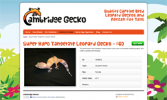 Cambridge Gecko – Website Design
