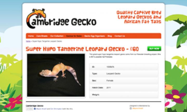 Cambridge Gecko – Website Design